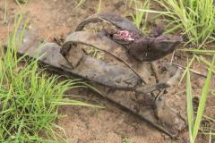 Anti-Poaching & Law Enforcement - Uganda Wildlife Safaris