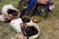 anti-poaching-and-law-enforcement-uganda-wildlife-safaris-58