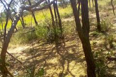 anti-poaching-and-law-enforcement-uganda-wildlife-safaris-63