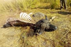 anti-poaching-and-law-enforcement-uganda-wildlife-safaris-65