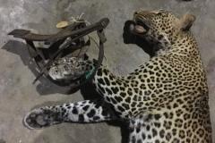 anti-poaching-and-law-enforcement-uganda-wildlife-safaris-66