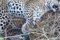 anti-poaching-and-law-enforcement-uganda-wildlife-safaris-67