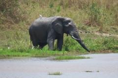 IMG_5716-uganda-wildlife-safaris-aswa-lolim