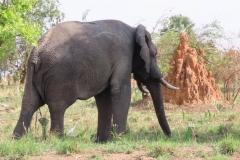 IMG_5724-uganda-wildlife-safaris-aswa-lolim