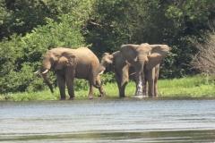 IMG_5804-uganda-wildlife-safaris-aswa-lolim