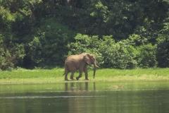 IMG_6058-uganda-wildlife-safaris-aswa-lolim