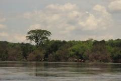 IMG_6166-uganda-wildlife-safaris-aswa-lolim