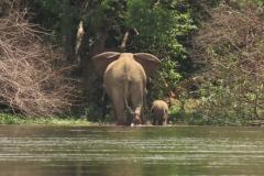 IMG_6198-uganda-wildlife-safaris-aswa-lolim