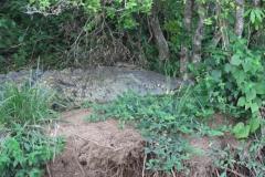 IMG_6633-uganda-wildlife-safaris-aswa-lolim