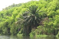 MVI_5753-uganda-wildlife-safaris-aswa-lolim