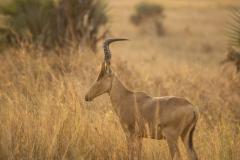 aswa-lolim-wildlife-gallery-12