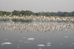 aswa-lolim-wildlife-gallery-17