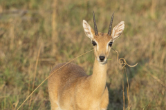 aswa-lolim-wildlife-gallery-6