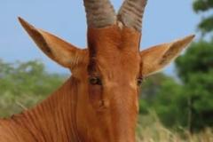 uganda-wildlife-safaris-aswa-lolim-10