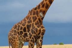 uganda-wildlife-safaris-aswa-lolim-11