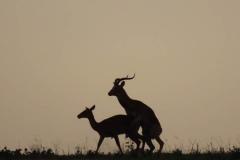 uganda-wildlife-safaris-aswa-lolim-12