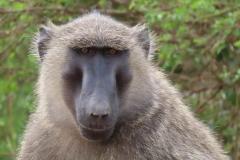 uganda-wildlife-safaris-aswa-lolim-16