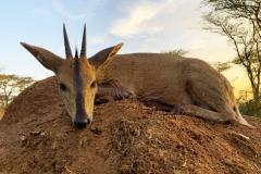 animal-gallery-hunting-season-2020-19