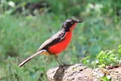 uganda-wildlife-safaris-kafu-river-basin-100