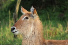 uganda-wildlife-safaris-kafu-river-basin-108
