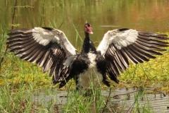 uganda-wildlife-safaris-kafu-river-basin-112