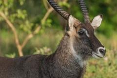 uganda-wildlife-safaris-kafu-river-basin-114