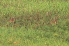 uganda-wildlife-safaris-kafu-river-basin-14
