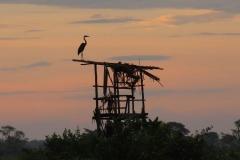 uganda-wildlife-safaris-kafu-river-basin-16