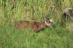uganda-wildlife-safaris-kafu-river-basin-18