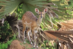 uganda-wildlife-safaris-kafu-river-basin-19