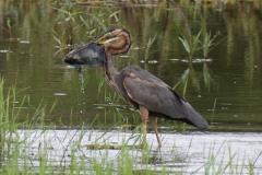 uganda-wildlife-safaris-kafu-river-basin-2