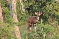 uganda-wildlife-safaris-kafu-river-basin-20
