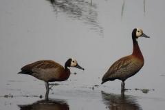 uganda-wildlife-safaris-kafu-river-basin-22