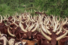 uganda-wildlife-safaris-kafu-river-basin-25