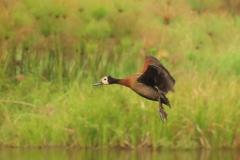uganda-wildlife-safaris-kafu-river-basin-26