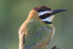 uganda-wildlife-safaris-kafu-river-basin-28