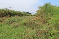 uganda-wildlife-safaris-kafu-river-basin-30