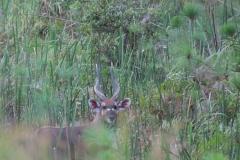 uganda-wildlife-safaris-kafu-river-basin-31