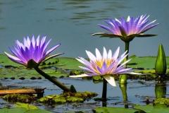 uganda-wildlife-safaris-kafu-river-basin-34