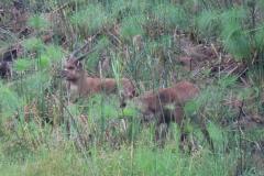 uganda-wildlife-safaris-kafu-river-basin-36