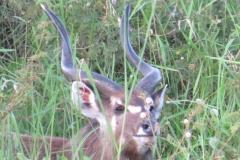 uganda-wildlife-safaris-kafu-river-basin-37