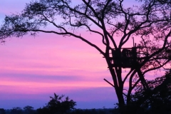 uganda-wildlife-safaris-kafu-river-basin-38