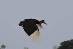 uganda-wildlife-safaris-kafu-river-basin-39