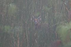 uganda-wildlife-safaris-kafu-river-basin-41