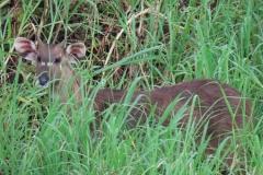 uganda-wildlife-safaris-kafu-river-basin-43