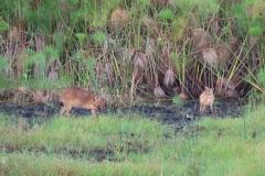uganda-wildlife-safaris-kafu-river-basin-44