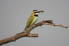 uganda-wildlife-safaris-kafu-river-basin-45