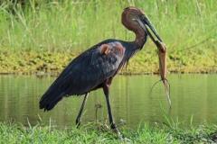 uganda-wildlife-safaris-kafu-river-basin-48