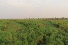 uganda-wildlife-safaris-kafu-river-basin-5