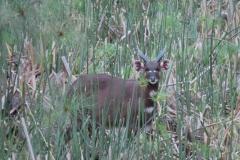 uganda-wildlife-safaris-kafu-river-basin-54